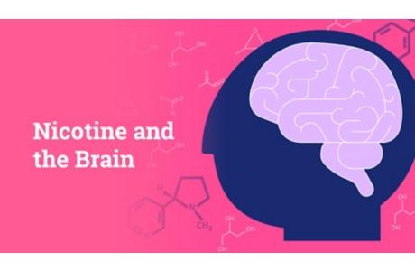 La nicotina y el cerebro (subtitulado)