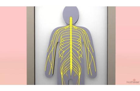 Anestesia: Bloqueo nervioso (subtitulado)