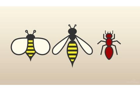 Picaduras de insectos: Aquí tiene ayuda