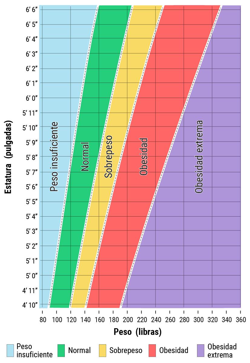 Intervalos saludables y de sobrepeso para adultos por altura y peso