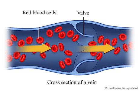 Picture of red blood cells