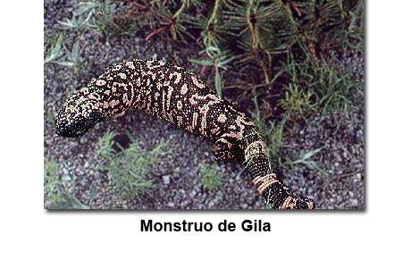 Fotografía de un monstruo de Gila