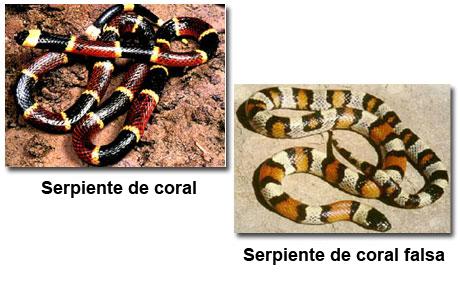 Fotografías de una serpiente de coral y de una serpiente de coral falsa