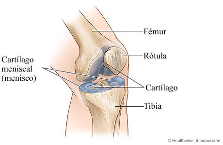 Cartílago de la rodilla