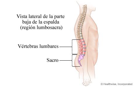 Imagen de la región lumbosacra de la columna vertebral (parte baja de la espalda)