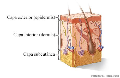 Corte transversal de la piel