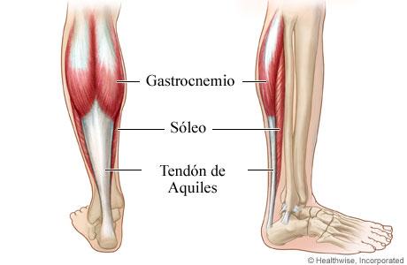 Tendón de Aquiles y músculos de la pantorrilla