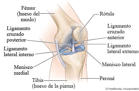 Huesos y ligamentos de la rodilla