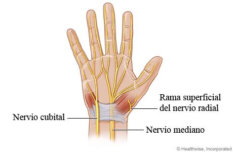 Nervios de la mano