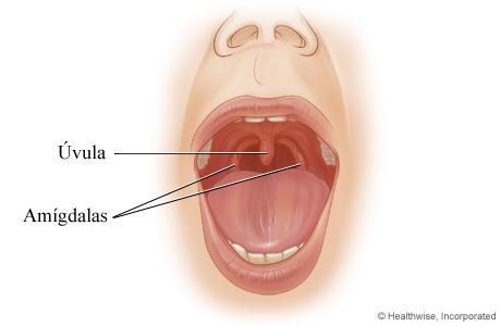 Las amígdalas y la úvula