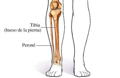 Imagen de los huesos de la parte inferior de la pierna